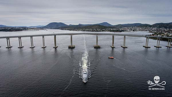 Ocean Warrior departing south for Antarctica from Hobart, Tasmania, Dec 4th Photo: Sea Shepherd Global/Simon Ager