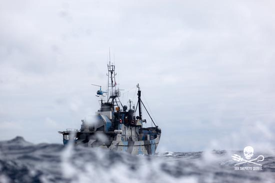The Steve Irwin. Photo: Sea Shepherd Global/Chelsea Miller