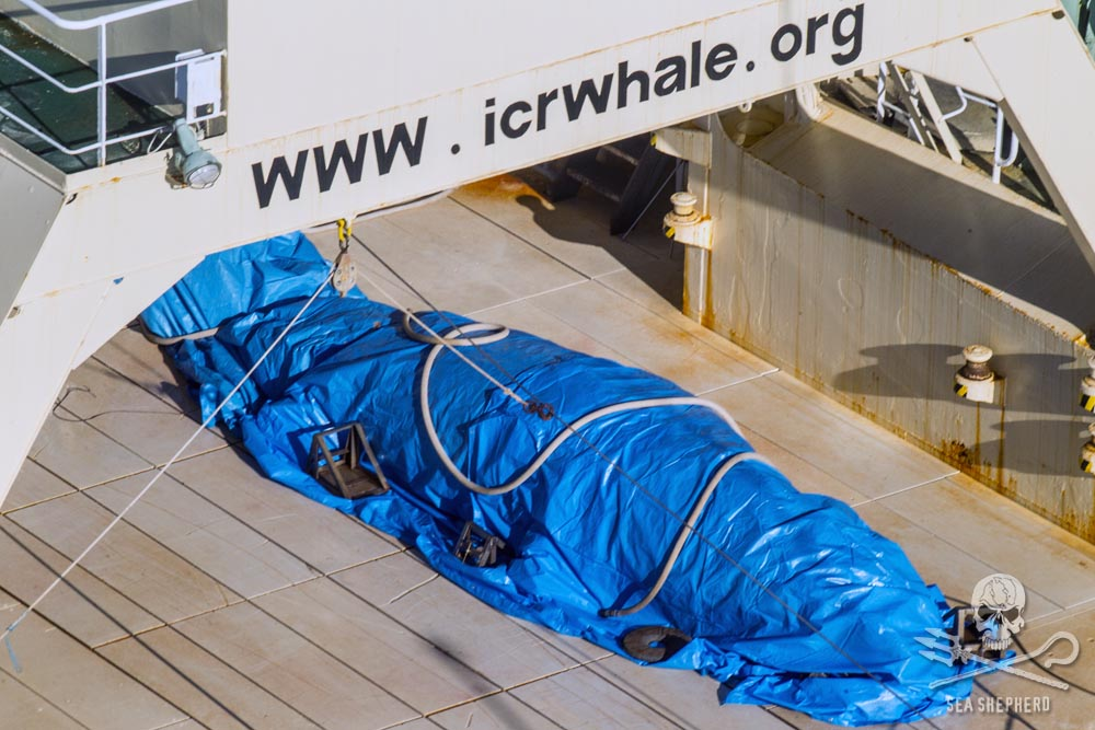 Japanese whalers cover their crimes with a mock body bag