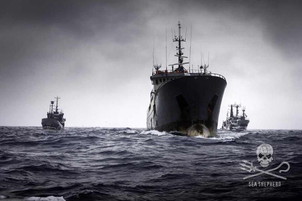 The Bob Barker and Sam Simon chasing the Thunder on Operation Icefish. Photo: Sea Shepherd Global / Simon Ager