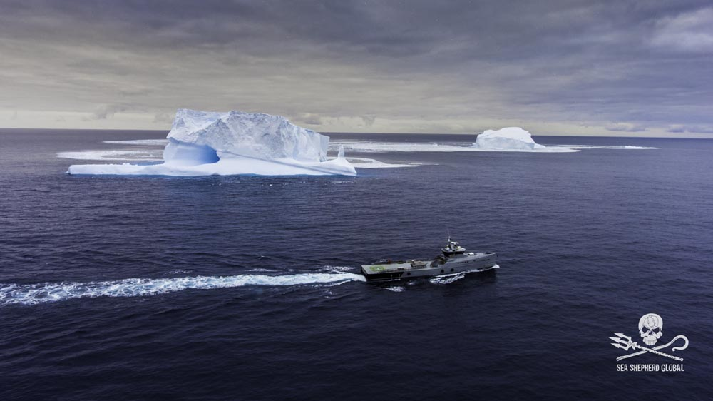 Ocean Warrior cruising past icebergs. Photo: Sea Shepherd Global / Simon Ager