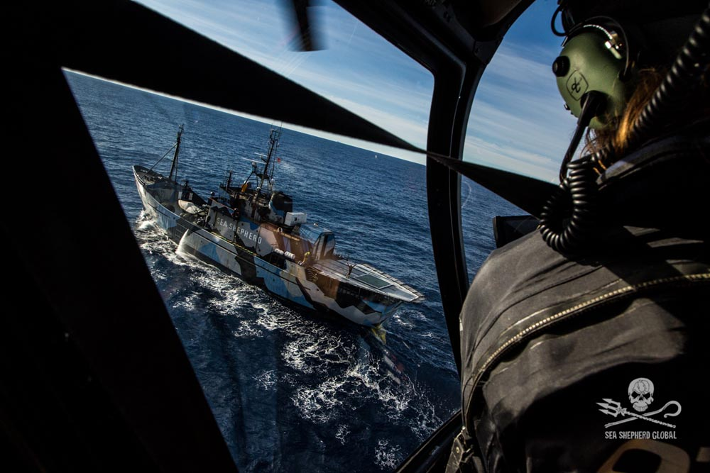 Heli Ops to find Nisshin. Photo: Sea Shepherd Global / Glenn Lockitch
