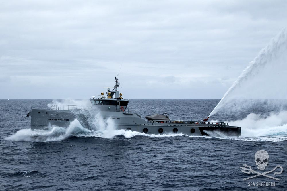 Ocean Warrior shows off to Steve Irwin. Photo: Sea Shepherd Global / Glenn Lockitch