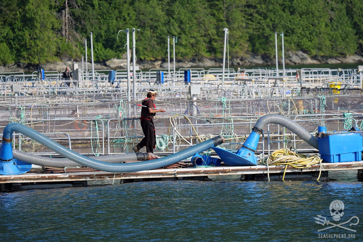 Hereditary Chief George Quocksisteron the fish farm taking photos of hard evidence
