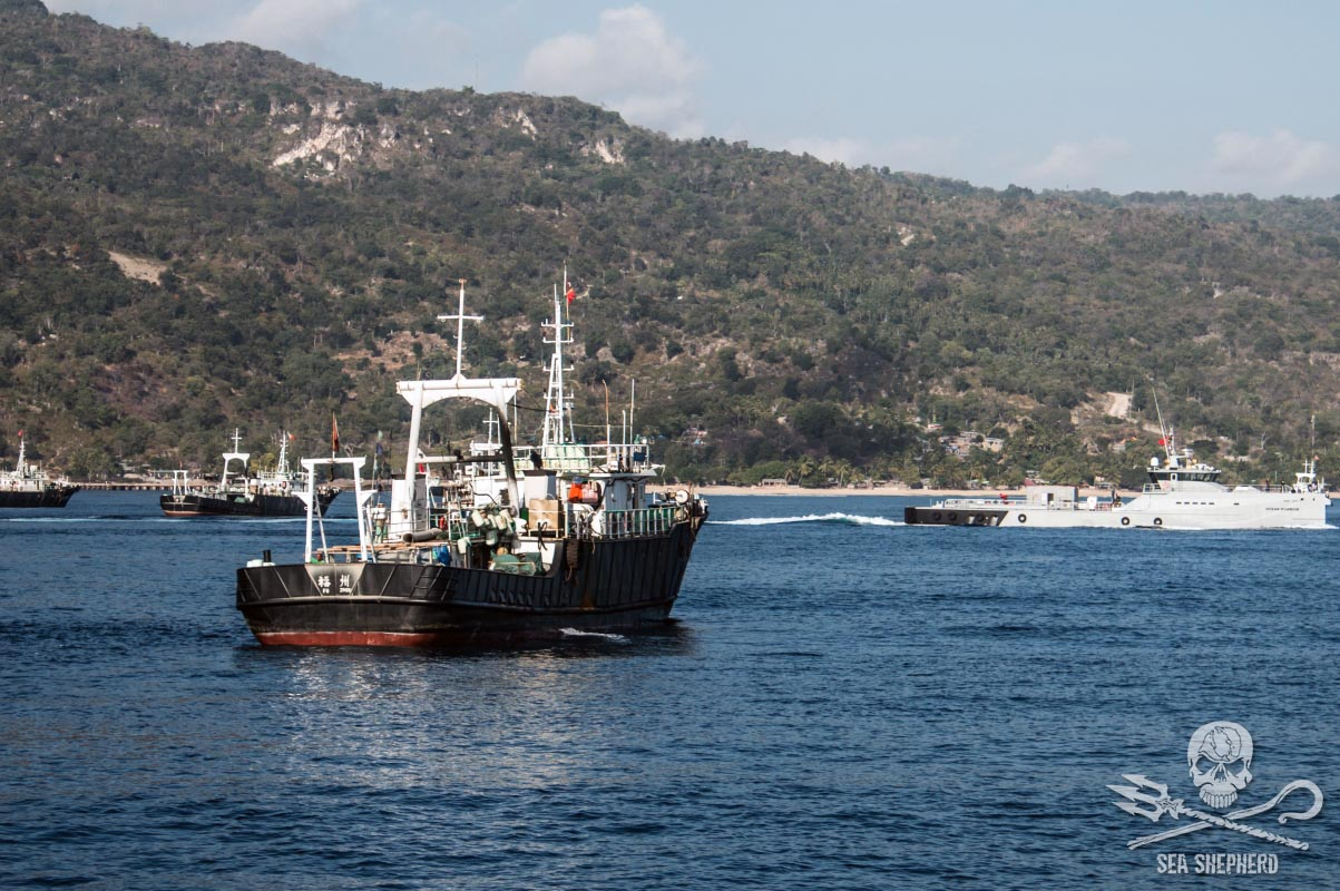 The M/V Ocean Warrior with the Fu Yuan Yu fleet off the coast of East Timor. Photo Jake Parker/ Sea Shepherd.