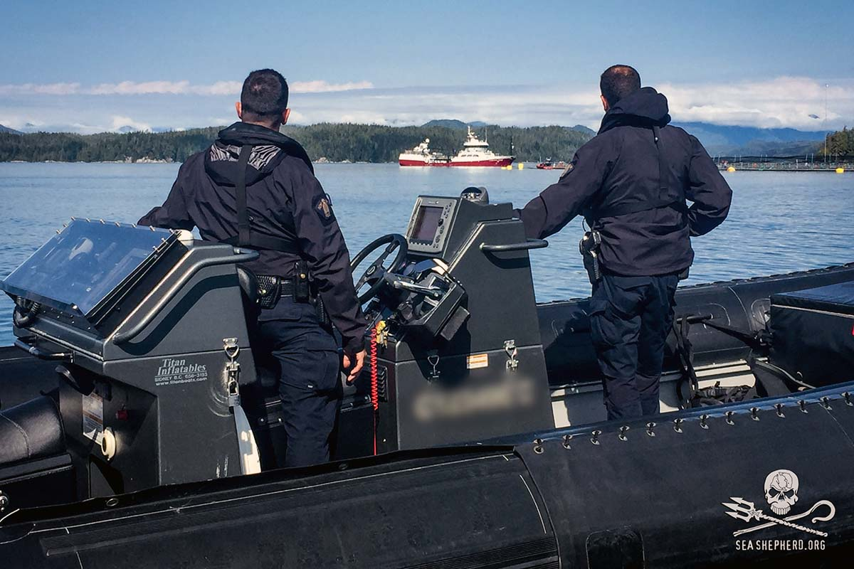 RCMP keeps watch as Victoria Viking arrives Midsummer to unload Herring into pens