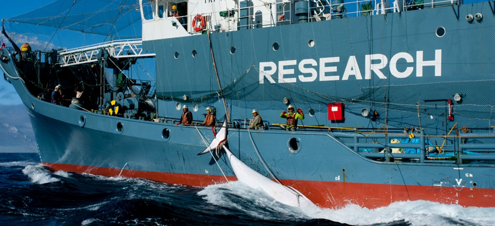 Sea Shepherd releases suppressed Australian Government whaling footage