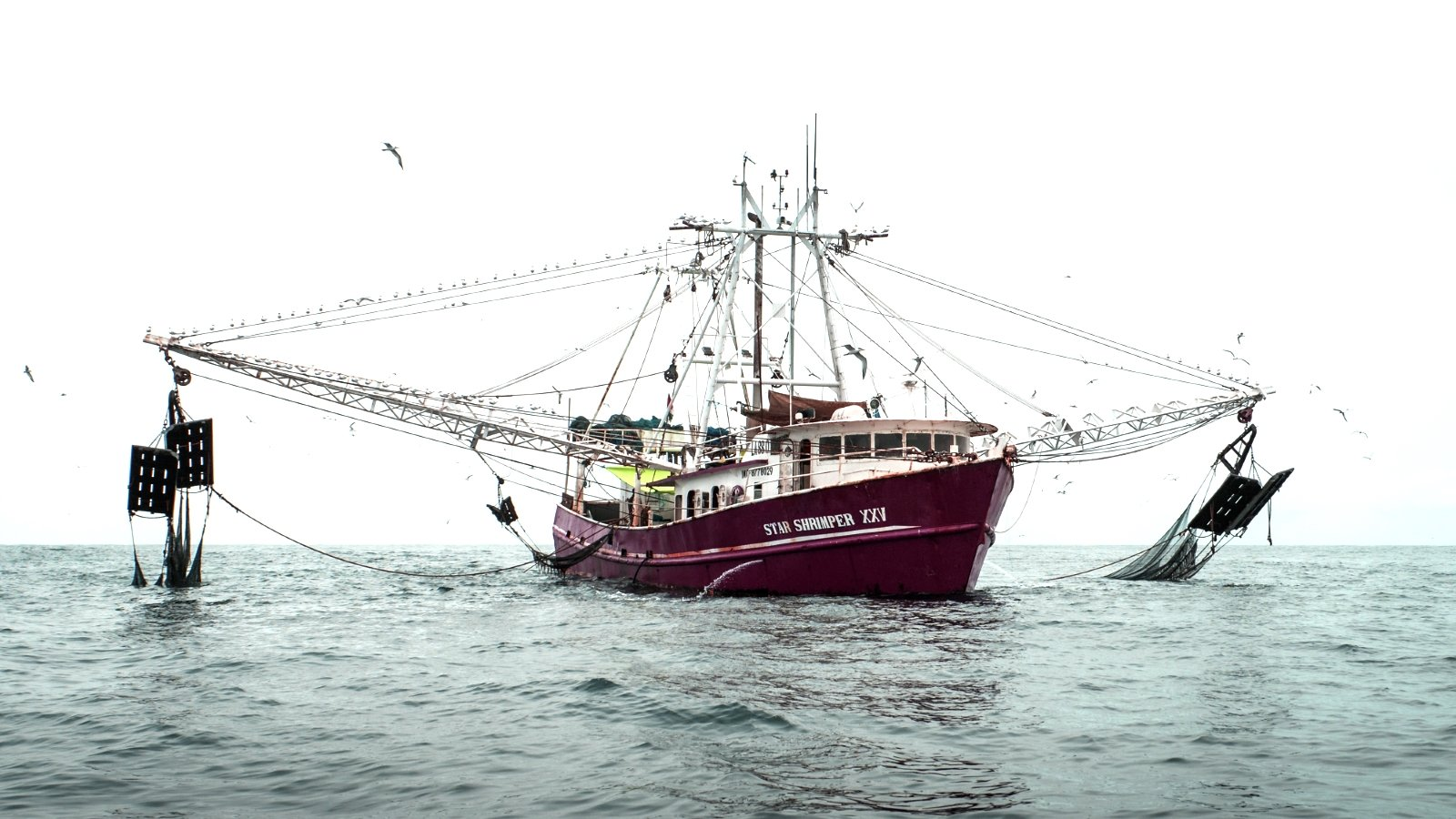 Nigeria Takes Action Against 'Sustainably-Certified' Shrimp Trawler