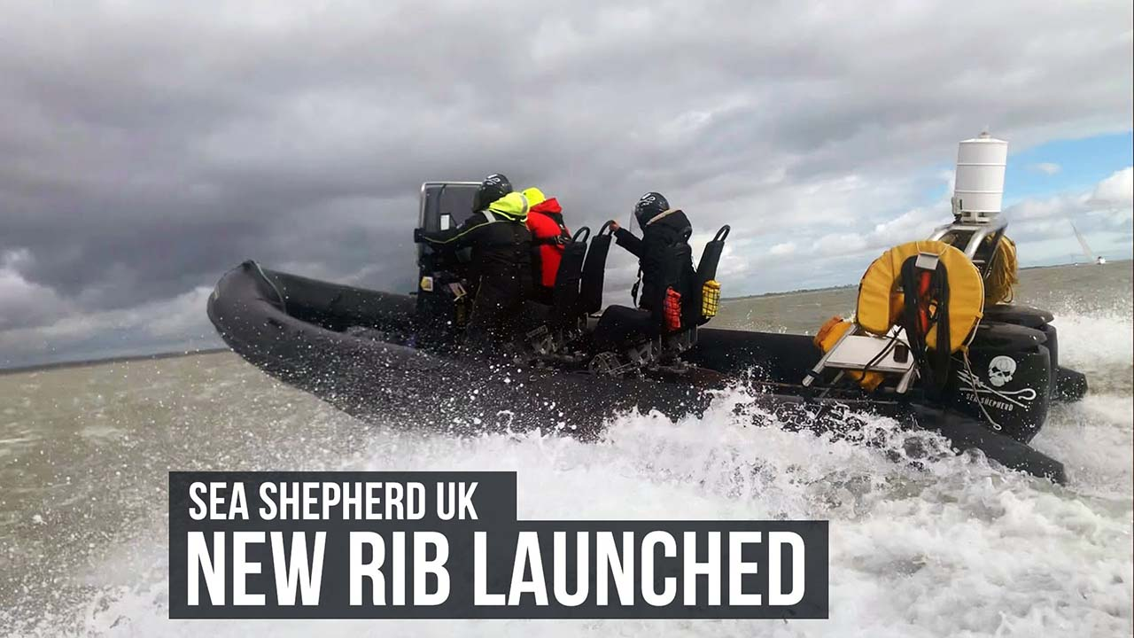 Introducing 'SHADOW' Sea Shepherd UK's latest addition to our RIB fleet