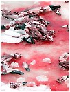 Seal carcasses left on the ice