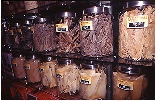 Jars of shark fins, seahorses, and other sea life for sale