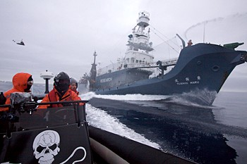 news_090201_1_2_Sea_Shepherd_crew_in_a_Zodiac_inflatable_boat_race_alongside_Japanese_harpoon_whaling_vessel_the_Yushin_Maru_No_1