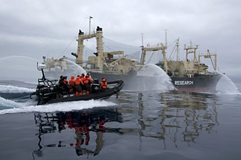news_090201_1_3_Sea_Shepherd_crew_pursue_Japanese_factory_whaling_ship_the_Nisshin_Maru