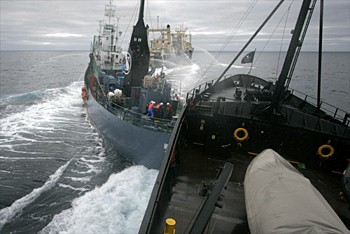 news_090205_2_3_whaling_opponents_collide_at_sea
