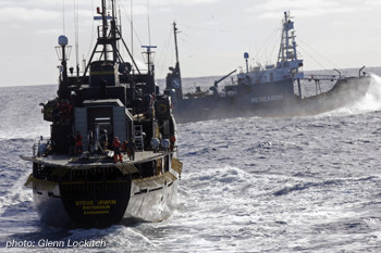 Sea Shepherd ships confront whalers