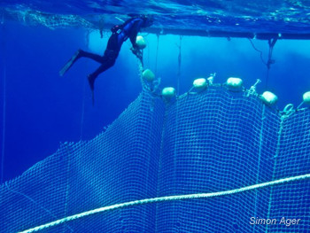 Tuna Diver and Net