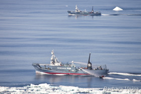 The Yushin Maru #2 and Yushin Maru #3 with Sea Shepherd's Zodiac boat alongside