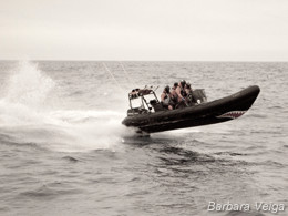 Sea Shepherd Delta team taking a beating from the Southern Ocean