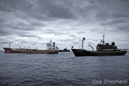 Sea Shepherd fleet escorting the Sun Laurel out of the Southern Ocean Whale Sanctuary (Photo: Simon Ager)