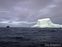 The Steve Irwin in relation to a large iceberg in the Southern Ocean (Photo: Simon Ager)