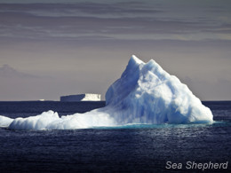 An iceberg in the Southern Ocean (Photo: Simon Ager)