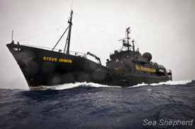 The Steve Irwin en route to the Ross Sea. Photo: Barbara Viega
