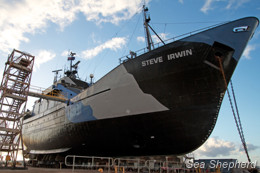 The Steve Irwin sits in the dry dock. Photo: Joshua Trenter