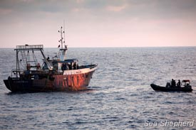 Sea Shepherd's Delta team approaches a fishing boat for investigation. Photo: Michelle McCarron
