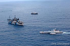 A bird's eye view of the Sea Shepherd's fleet at sea, tuna net and fishing vessel. Photo: Michelle McCarron