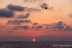 Sea Shepherd's helicopter patrols the sea at sunset. Photo: Libby Miller