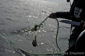 A crewmember recovers a ghost net from the water.