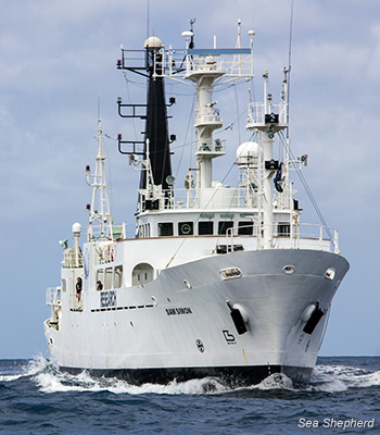 The SSS Sam Simon is the newest vessel to join Sea Shepherd's fleet