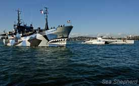 The Sea Shepherd ships, MY Bob Barker and MY Brigitte Bardot arrive in Sydney harbor. Photo: Glenn Lockitch