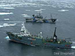 Steve Irwin and Yushin Maru circle