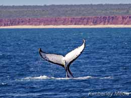 Humpback Whale off James Price Point  -  photo: Annabelle Sandes/Kimberley Media