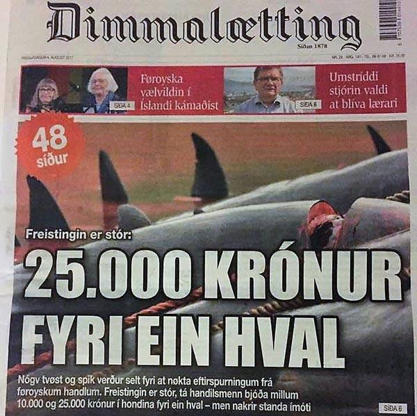 Faroese newspaper 'Dimmalaetting' front page article 4th August 2017 stating that whole Pilot whales were being sold to supermarkets for 25,000 Kronur each [Photo: Sea Shepherd UK]