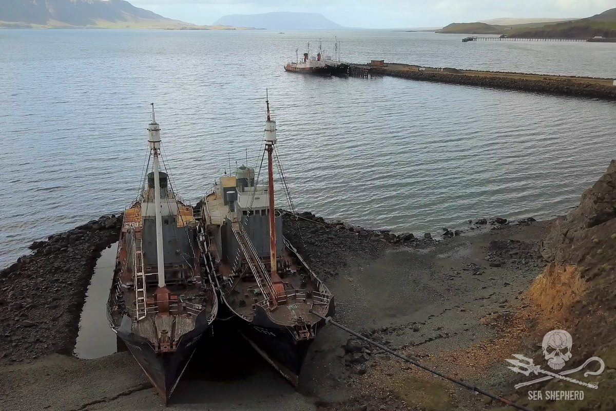 Hvalur 6 & 7 scuttled in 1986 sit rusting on a hidden beach to the east of the whaling station in Hvalfjordur - Sea Shepherd UK (2018)