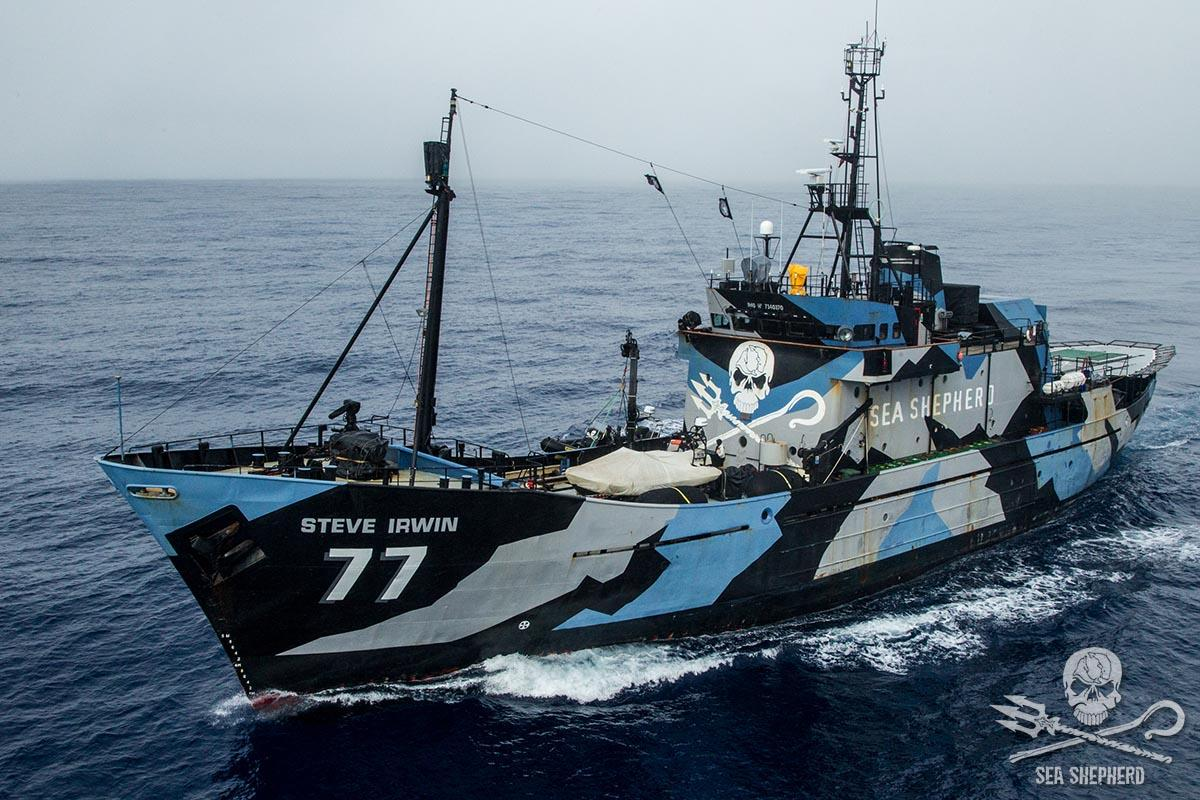 Boutique Sea Shepherd France. Product successfully added to your shopping cart.